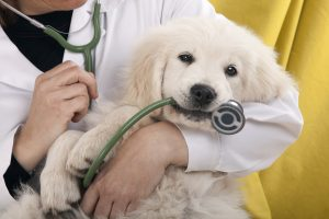 Happy National Pet Health Insurance Month!