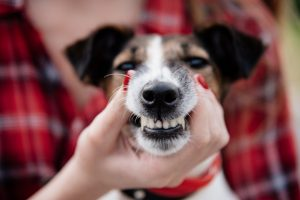 Does My Pet Need a Dental Cleaning